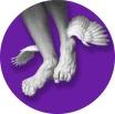 New_pieds_ailés_pitonMauve